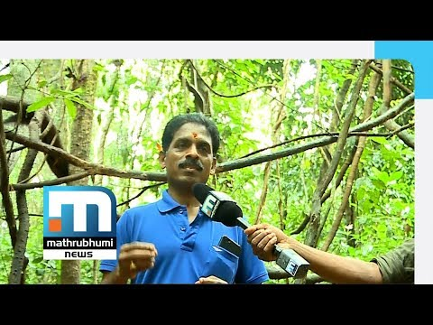 Today, World Celebrates Environment Day| Mathrubhumi News: