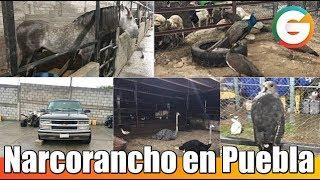 Narcorancho de líder de Los Rojos en #Puebla