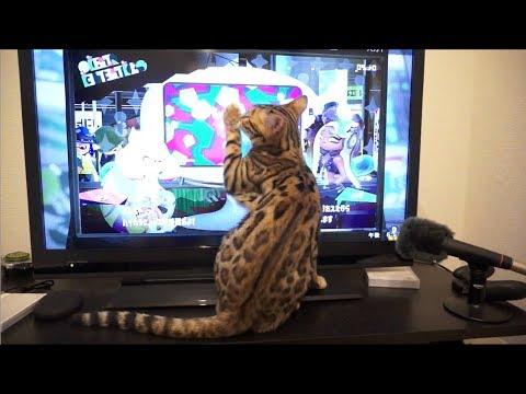 ゲームを始めると邪魔をしてくる猫