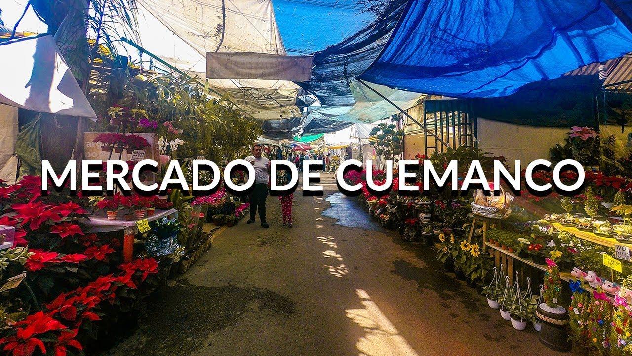 Mercado De Flores Y Plantas Cuemanco Xochimilco Mexico Un Dia