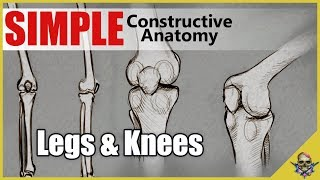 How to Draw Legs & Knees - Simplified Constructive Anatomy - Art Tutorial