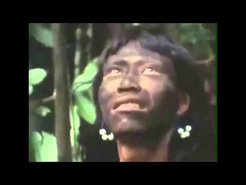 Catavento - Fauna Sound ☷ OFFICIAL VIDEO ☷