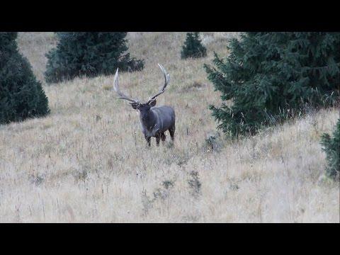 Maral - Hunting In Kazakhstan
