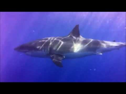 Diver Shares Moments Before Shark Cage Breach Accident