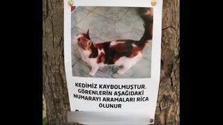 Kayıp kedi ile sahibinin buluşma anı \\ 6 gün sonra gelen mutluluk