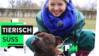 Dogs of Berlin - Tiere pflegen im Tierheim