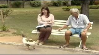 Amigo Ganso: a curiosa amizade entre um comerciante e o animal