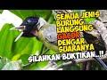 Ada Burung Samyong Super Gacor Di Pohon Nangka Sebelah Rumah Suaranya Wadidawwww  Mp3 - Mp4 Download