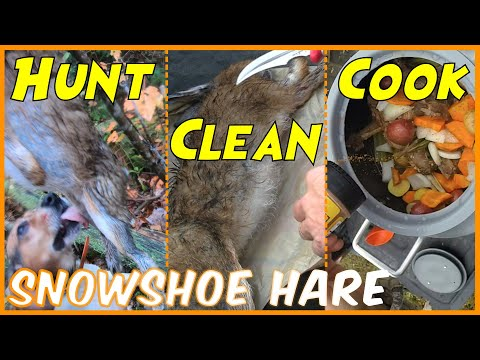 Snowshoe Hare Hunt, Clean & Cook   Rabbit Hunting NH