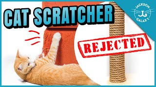 Why Your Cat Won't Use the Scratching Post