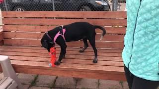 Luna - Humane Society of Dallas County