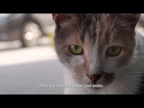 KEDi Official Trailer (Cats in İstanbul) kedifilm.com
