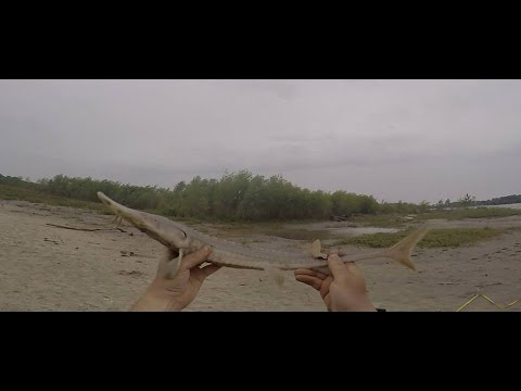 Missouri River Fishing in Nebraska 5-13-2015