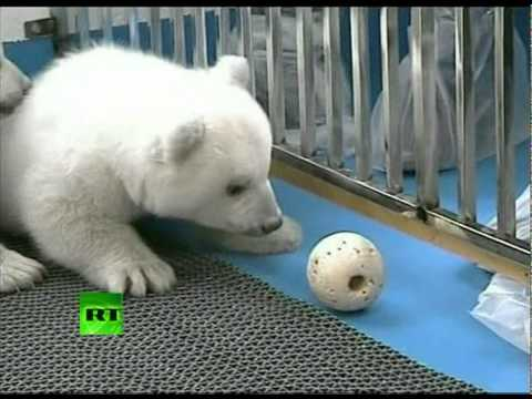 Cute twin polar bear cubs set to meet public at China zoo