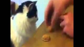 貓咪也愛玩猜猜猜
