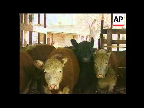 Argentina: Beef: foot-and-mouth disease: voluntary beef exports restrictions