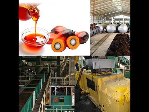 palm oil processing machine installed in Indonesia , Malaysia and Nigeria