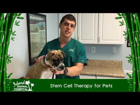 Stem Cell Therapy in Dogs, Cats, and Horses Island Animal Hospital's Dr. Christiansen Explains