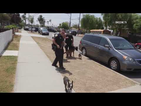 National City: Officer & K-9 Attacked During Search 08162018