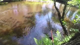 Добыча ручейника, принцип ловли на ручейник видео rybachil.ru