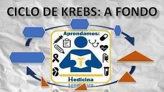 CICLO DE KREBS: A FONDO
