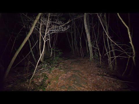 【4K】Walking at night in Aokigahara forest (no pranks, not scary. ASMR?)