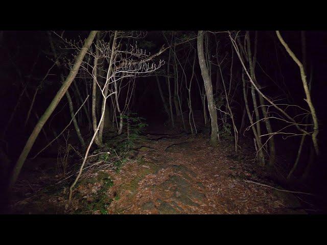 4kwalking At Night In Aokigahara Forest No Pranks Not