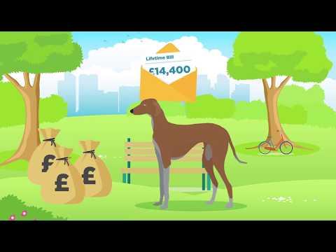 Doggle Guides - Azawakh - Dog Breed Info