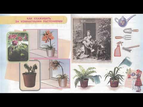 """Окружающий мир 1 класс ч.1, тема урока """"Как ухаживать за комнатными растениями"""", с.34-35, Перспекти"""