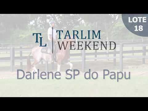 Lote 18 - Darlene SP do Papu (6º Leilão Tarlim)