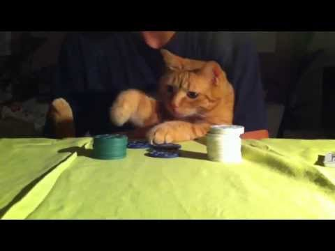 AND IF CATS PLAY POKER?