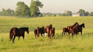Claiborne Farm -