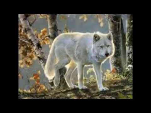 Os Lobos Mais Bonitos Youtube