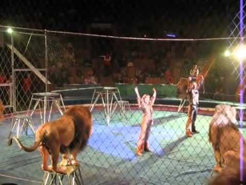 Λιοντάρια επιτίθενται στους εκπαιδευτές την ώρα της παράστασης_σκληρές εικόνες_ lilitv Λίλη