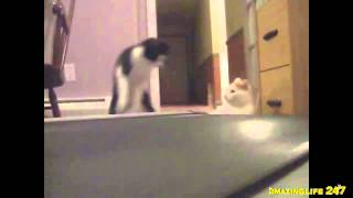 Секретная жизнь котов