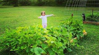 My Very First Garden: July 2019 Update (Organic Raised Bed Gardening) The Kneady Homesteader