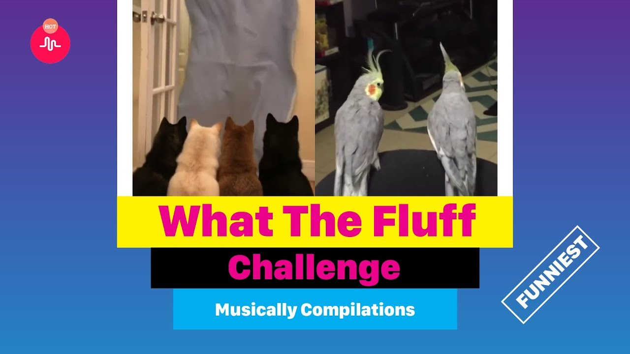 What The Fluff Challenge ★ Musically Compilation 2018  #Whatthefluff