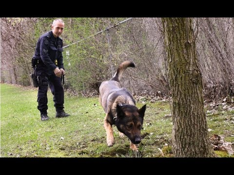 Watch how cadaver dogs find human remains for police - YouTube