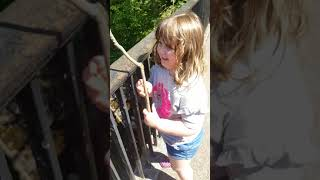 HOW TO PLAY POOH STICKS (Free fun for kids)