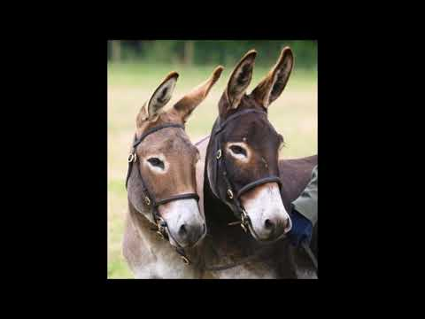 Two Mules by Nathaniel Urshan