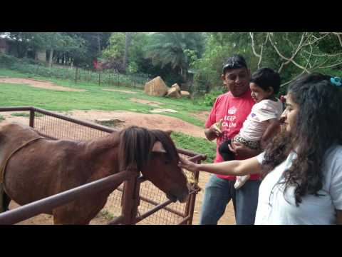 Kids Feeding farm animals (martin farm bangalore)