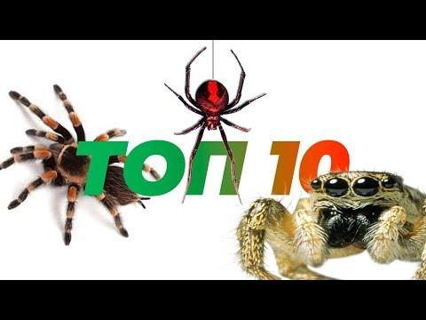 Топ 10 пауков для содержания дома.