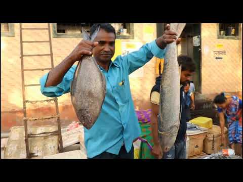 Mumbai Wholesale Fish Market For Big Tiger Prawns 5 Kg Halwa Fish  6 Kg Rawas  Fish Price In Mumbai