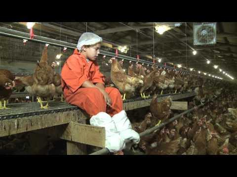 Visit Willamette Egg Farms' organic hen house