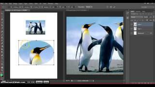 018 - Adobe Photoshop CS6 -  Resimden Seçim Alanı İle Kesme