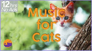 (NO ADS) 12 Hours of Extremely Relaxing Cat Music!