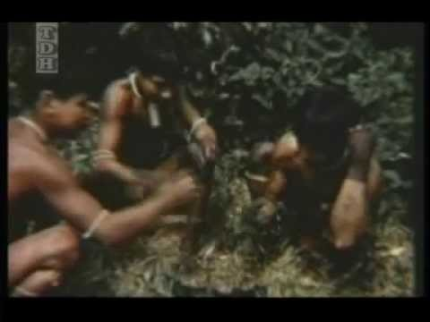 Omidvar Brothers - Man of The Amazon