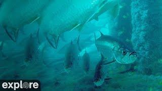 Deerfield Underwater Cam powered by EXPLORE.org