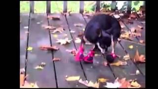 Ржачные собаки в обуви