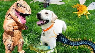 Puppy Logan Eats Bugs Saved from the Huge Centipede by T-Rex!